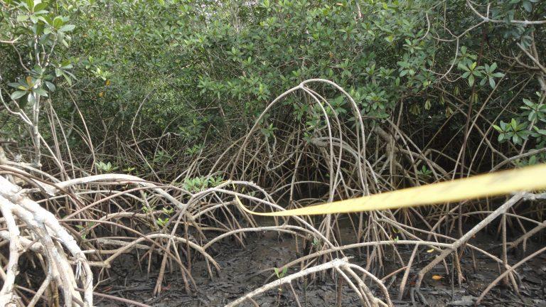 National Mangrove Biomass Survey