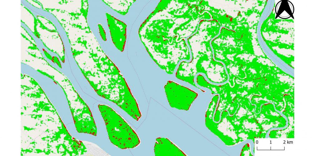 mangrovenipacalabar